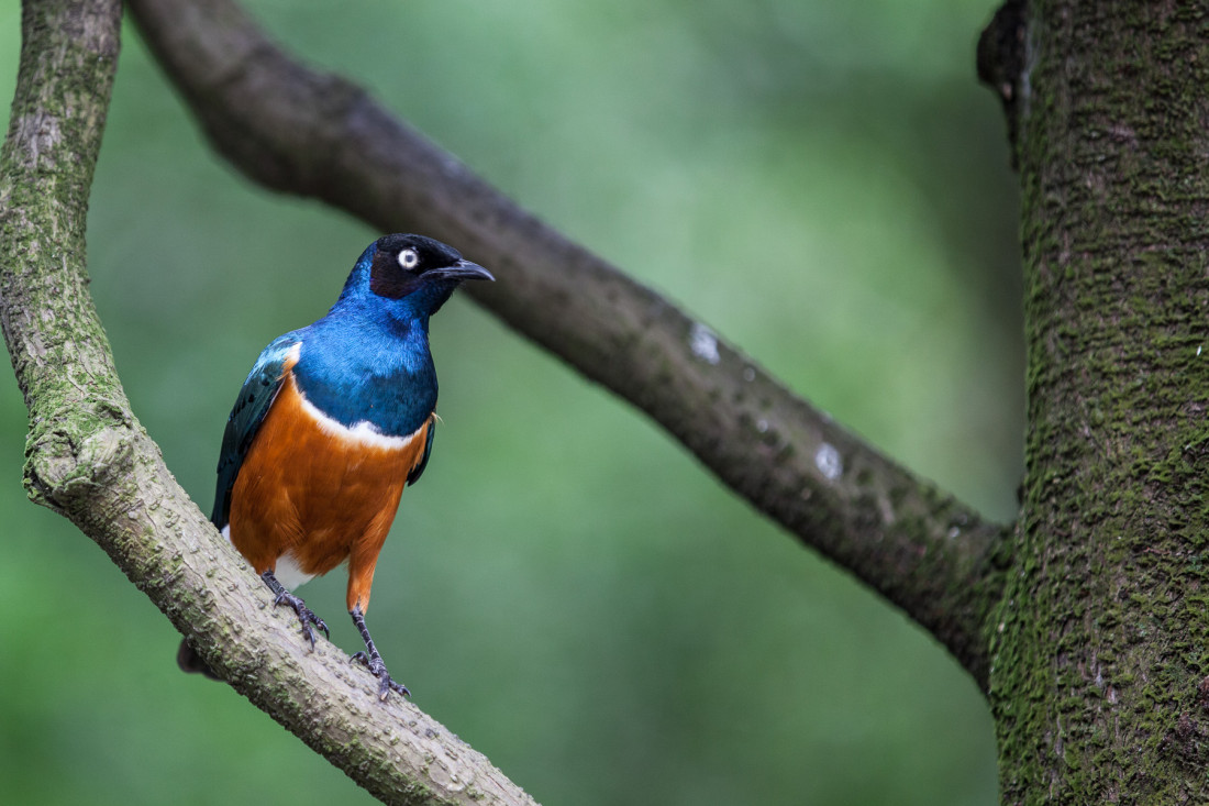 Vogel mit blauem Kopf