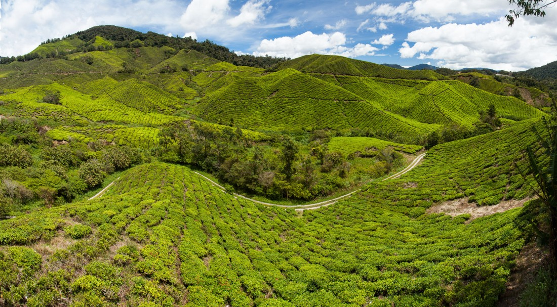 Ausblick aus der Teeküche der BOH Plantage