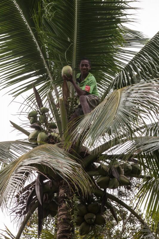 Vorsicht vor fallenden Kokosnüssen.