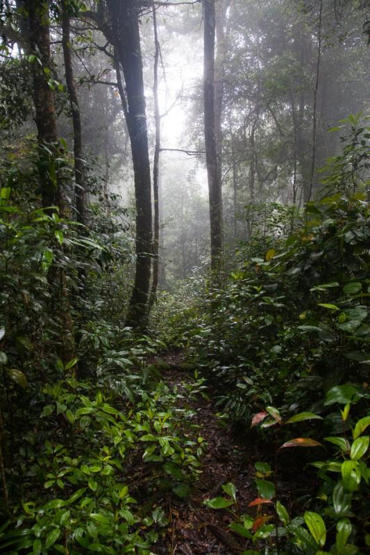 Lechtendes Grün im nassen Regenwald