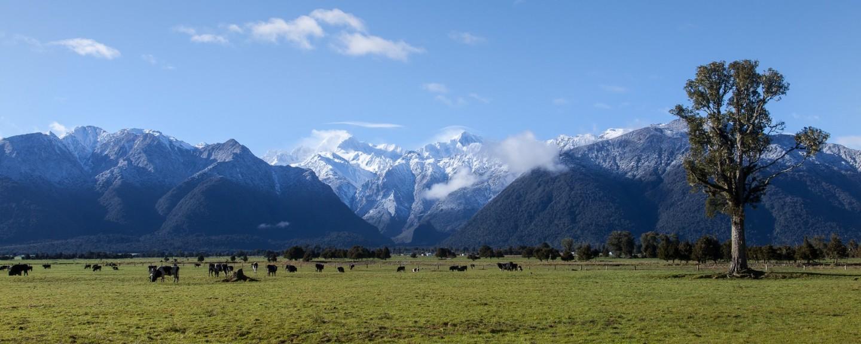 Die Gletscher der Southern Alps