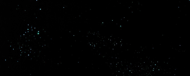 Waitomos Glühwürmchen
