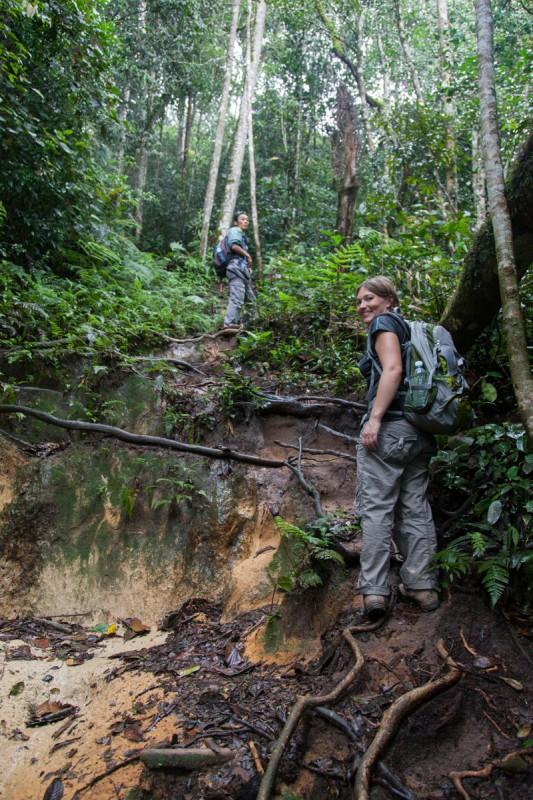 Steiler Aufstieg durch den Regenwald der Cameron Highlands