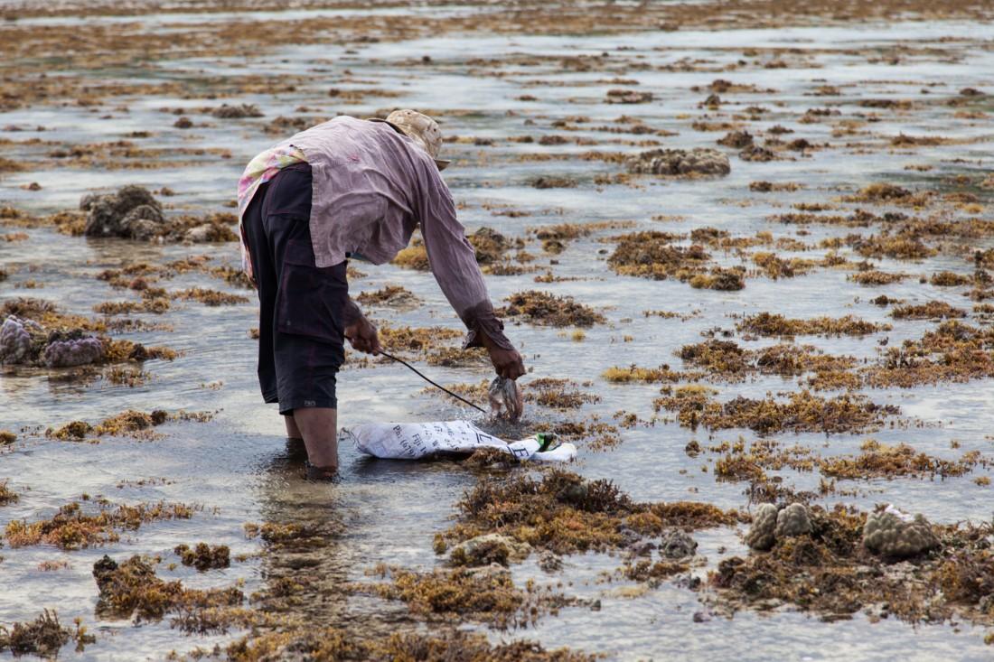 Sobald der Meeresgrund von der Ebbe freigelegt wird, gehen die Dorfbewohner auf Tintenfischjagd.
