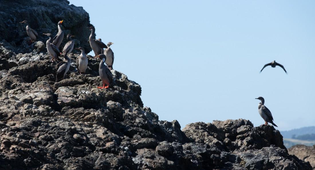 Vogelinsel Islotes de Punihuil