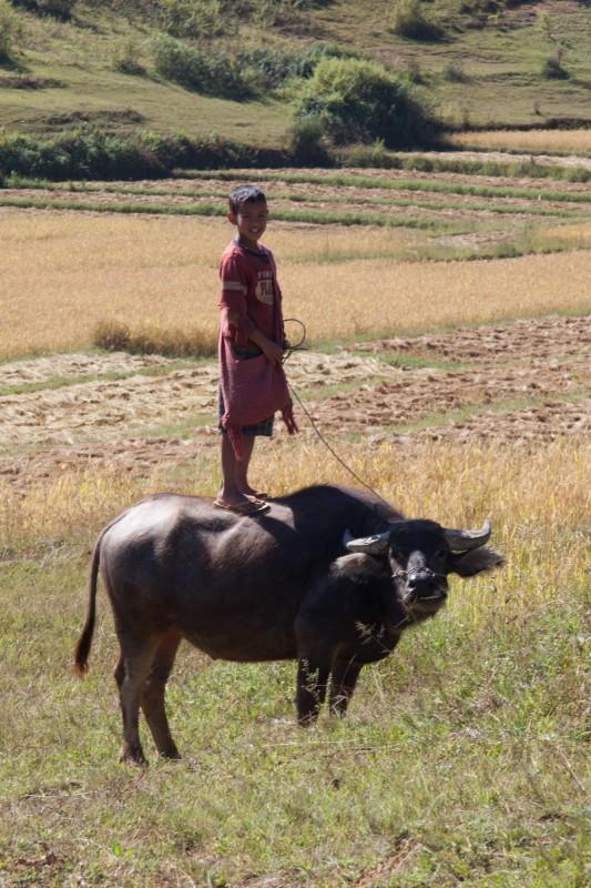Von so einem Stier hat man ne super Übersicht