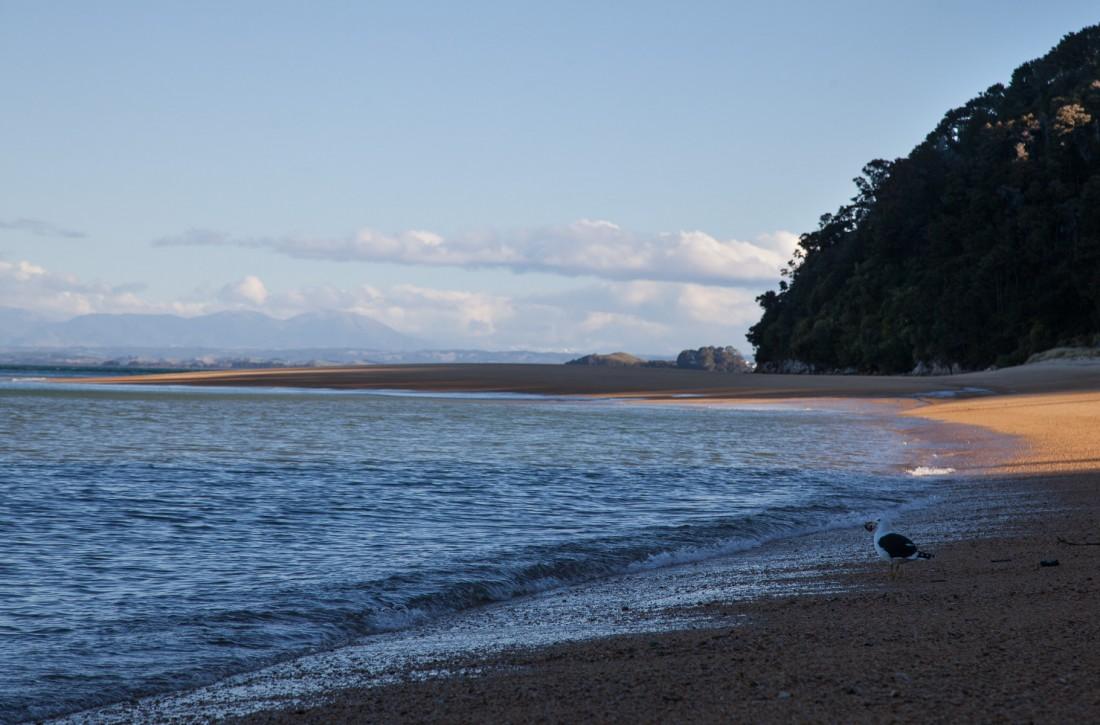 Die kleine Möwe hat den ganzen Strand für sich alleine