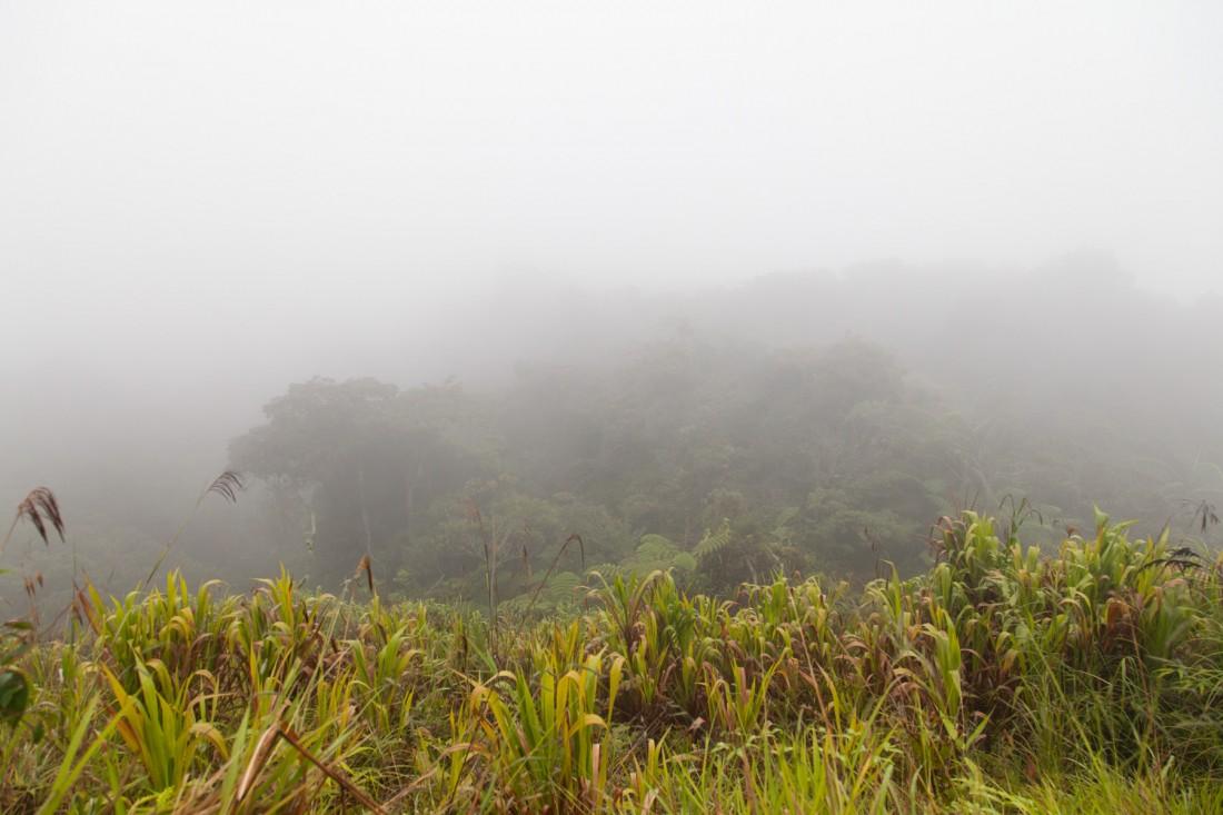 Dort hinterm Nebel sähe man die Täler der Cameron Highlands bi