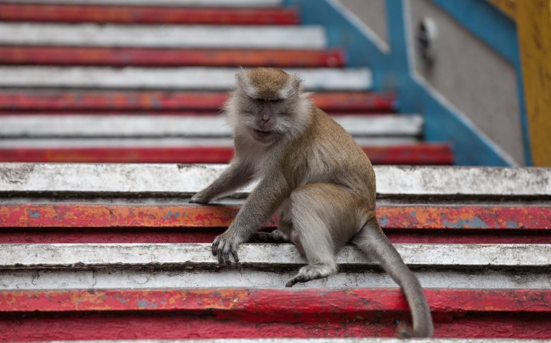 Opa-Affe beobachtet die Besucher argwöhnisch